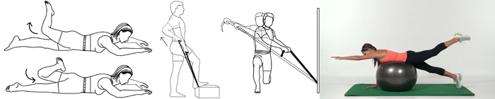 Line Art Exercises : Exercise pro software for physical therapists and